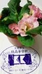 「2016世界に一つだけの花」プロジェクト